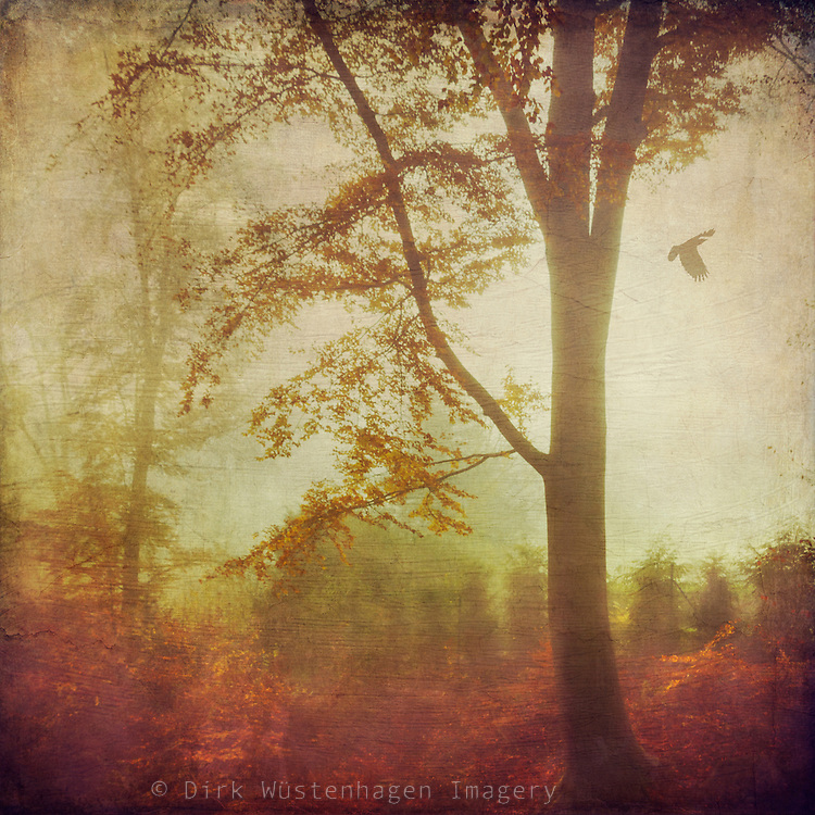 Trees in morning haze and backlight on a November morning - textured photograph<br />
