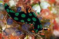 ..Solomon Islands