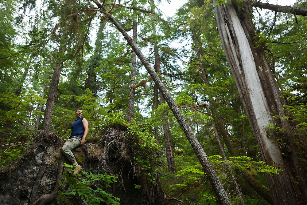 Henry looks out from the top of the root wad of a fallen tree along the West Coast Trail, British Columbia, Canada.