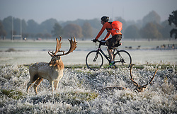 © Licensed to London News Pictures. 28/10/2019. London, UK. A man cycles past deer grazing in a frost and mist covered landscape on a bright winter morning in Richmond Park, London. The UK is due to see brighter weather over the next few days, following days of heavy rain which caused flooding in parts. Photo credit: Ben Cawthra/LNP