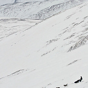 David Dalton makes the descent at Eagle Summit, near Fairbanks, Alaska during the 2006 Yukon Quest International Sled Dog Race, a 1000-mile trek through the wilderness between Fairbanks and Whitehorse, Yukon, Canada.