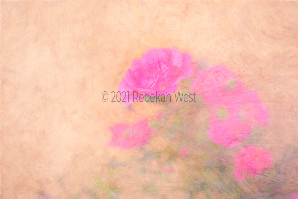 Soft vibrant hot pink rose held up and propelled by group of matching rose blobs and vague leaf shapes basically oriented from down right toward up center in horizontal field, background soft painterly millennial pink, painterly, flower art, feminine, high resolution, licensing, 5616 x 3744