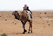 A bedouin on his camel appears in the desert in the area of Palmyra