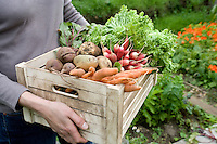 Woman carrying crate of vegetables mid section