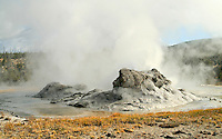 Steaming Grotto Geyser in Yellowstone National Park, Wyoming erupts every 8 hours