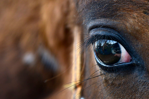 Nederland, Wijchen, 11-10-2014 Paardenmarkt en boerenmarkt in Wijchen. Een paardenoog, oog van het paard. FOTO: FLIP FRANSSEN/ HOLLANDSE HOOGTE