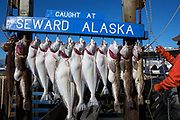 Hamnen i Seward, Alaska<br /> <br /> Photographer: Christina Sjogren<br /> <br /> Copyright 2018, All Rights Reserved