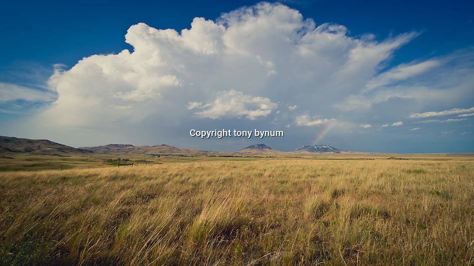 conservation photography - montana wild prairie