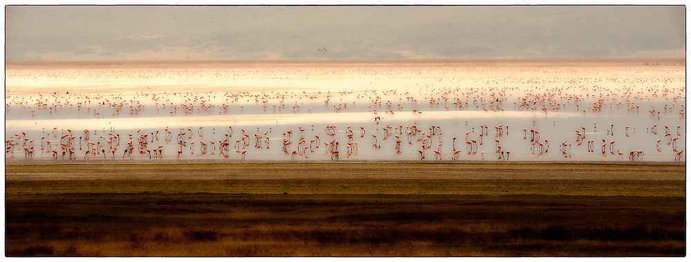 Flamingoes on lake, Ngorongoro Crater