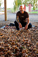 Meriwether's Restaurant is  one of the few restaurants operating their own 5 acre vegetable farm on Skyline Blvd. in NW Portland.  Throughout the 2009 harvest, the restaurant has served over 8000 pounds of Skyline Farm produce.  Chef Earl Hook with a variety of onions drying in the shed.