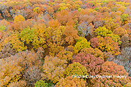 63876-02505 Aerial view of fall color trees Stephen A. Forbes State Park Marion Co. IL