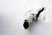 Winter in de Soest