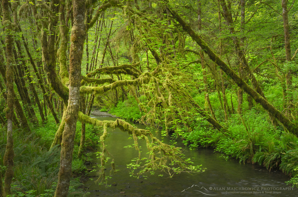 Lost Man Creek, Redwoods National Park California