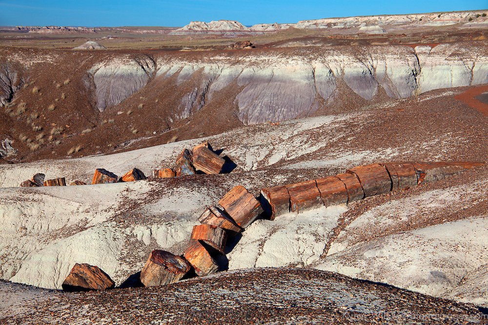 North America, USA, Arizona, Petrified Forest National Park. Fallen logs in Crystal Forest.