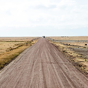 One of the dirt roads that crisscross the floor of the crater at Ngorongoro Crater in the Ngorongoro Conservation Area, part of Tanzania's northern circuit of national parks and nature preserves.