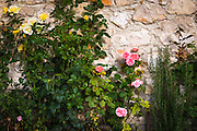 Roses and wall, Korana Village, Plitvice Lakes National Park, Croatia