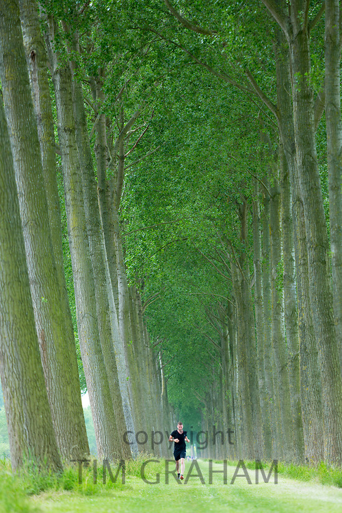 Jogger man running along avenue of tall trees canalside at Damme, province of West Flanders, Belgium
