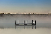 A common loon sits on a swim platform on a foggy sunrise morning on Trout Lake in the Northwoods village of Boulder Junction, Wisconsin.