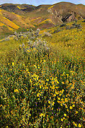 Carrizo Plain National Monument in bloom.