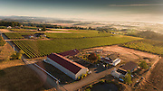 Brooks Estate vineyard, Eola-Amity Hills AVA, Willamette Valley, Oregon