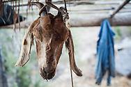 En la sierra de San Francisco y Santa Marta, la mayoría de las familias rancheras cuentan con chivas que les proveen de leche para la producción de queso y carne para venta y consumo propio.