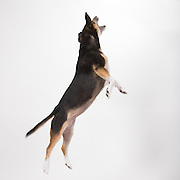This is similar to the photo used as part of my original logo.  I eventually changed it to a sitting Spring silhouette because someone suggested that the jumping dog could be viewed as a bit aggressive.  I wasn't sure I agreed that it gave my business a negative connotation but I liked the sitting Spring version just as well.