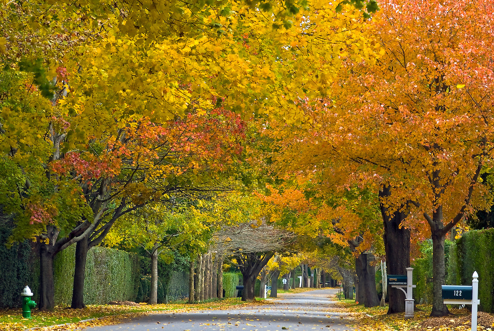 Street in the Fall, Southampton,  New York, Fall, South Fork, Long Island