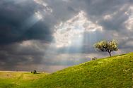 Spring green land