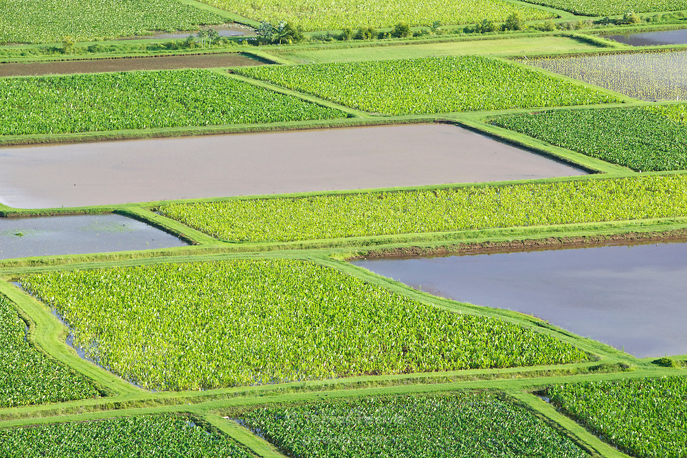 Aerial view of taro fields near Hanalei, on the island of Kauai, Hawaii.