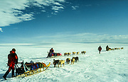 Dog sledging and skiing across Greenland icecap, Arctic