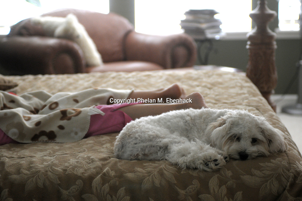 A cockapoo puppy takes a nap next to her owner's feet.