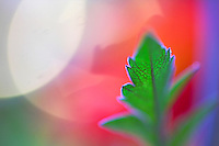 green leaf with vein detail. Red Background