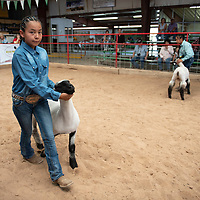 Dylane Carlisle, 12, showing her lamb, Friday, August, 31, 2018 at the Bi-County Fair in Prewitt.