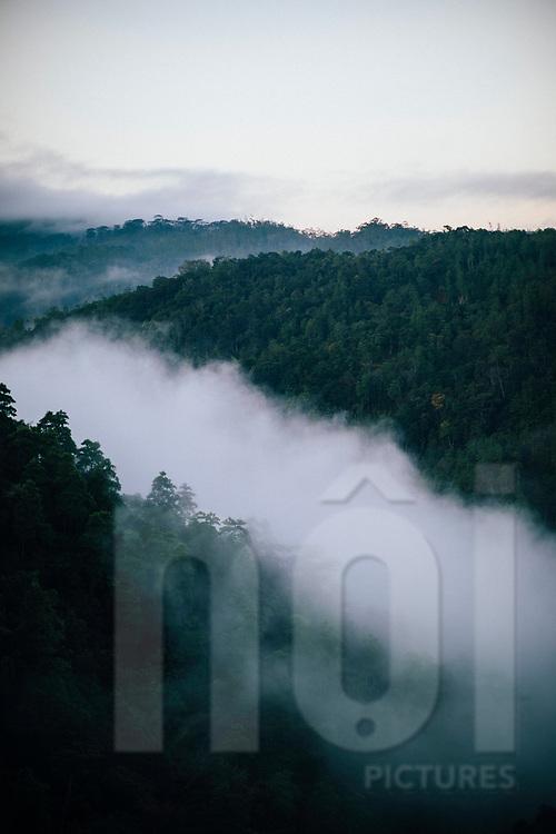 Morning mist in the Knuckles Mountain Range, Kandy, Sri Lanka, Asia