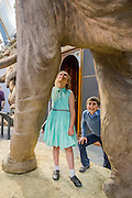 Beatriz Mendes and James Ward look up at a life size model of an adult. Mammoths: Ice Age Giants at the Natural History Museum (opens 23 May 2014)<br /> It includes huge fossils and life-size models of mammoths and their relatives tower above you and meet Lyuba, the world's most complete mammoth, as she takes centre stage in the exhibition for her first appearance in western Europe. She is the star of the show, a baby woolly mammoth discovered in Russia's Yamal Peninsula of Siberia in May 2007. She died around 42,000 years ago at just one month old. Her body was buried in wet clay and mud which then froze, preserving it until she was found by reindeer herder Yuri Khudi and his sons, as they were searching for wood along the frozen Yuribei River thousands of years later. The exhibition also includes some of the best-known species, from the infamous woolly mammoth and the spiral-tusked Columbian mammoth to their island-dwelling relative the dwarf mammoth. South Kensington, London.