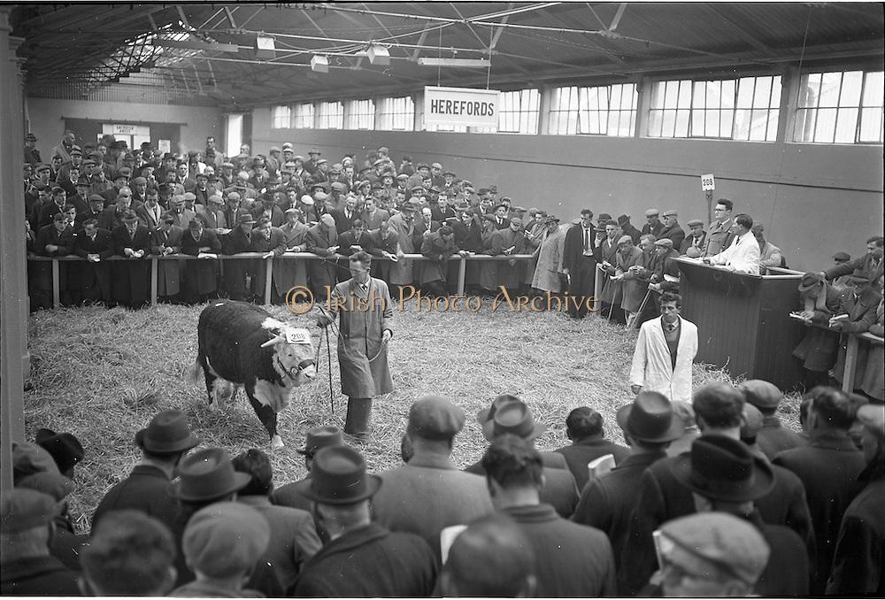 20/02/1963.02/20/1963.20 February 1963.RDS, Dublin ireland. Bull Show.