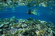 Coral Reef  and snorkeler<br /> Fiji. South Pacific