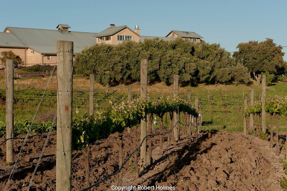 Acacia winery, Carneros, NApa County, California