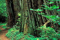 Redwood National Park, CA<br />