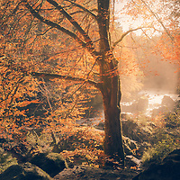 Autumns' light over the River Braan, The Hermitage, Dunkeld.