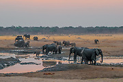 A herd of elephants drink at a water hole at dusk, Hwange National Park, Zimbabwe.