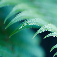 close-up of fern fronds