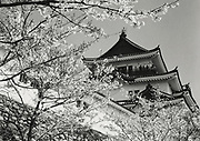 Asano Kiichi<br /> 1914 - 1993<br /> <br /> Wakayama Castle, 1950s. <br /> <br /> Vintage gelatin silver print that has on the reverse; Asano's blue studio and red hanko stamps, as well as a caption inscription in the artist's hand.<br /> <br /> Size 6 1/2 in. x 4 3/4 in. (165 mm x 120 mm). <br /> <br /> Condition very good.<br /> <br /> Price ¥80,000<br /> <br /> <br /> <br /> <br /> <br /> <br /> <br /> <br /> <br /> <br /> <br /> <br /> <br /> <br /> <br /> <br /> <br /> <br /> <br /> <br /> <br /> <br /> <br /> <br /> <br /> <br /> .