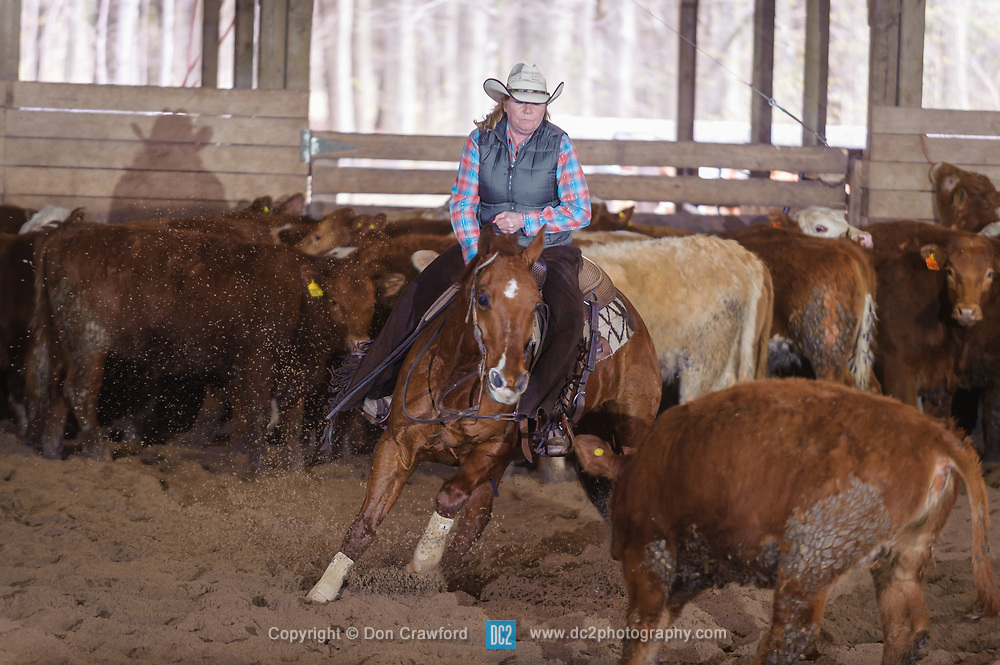 April 29 2017 - Minshall Farm Cutting 1, held at Minshall Farms, Hillsburgh Ontario. The event was put on by the Ontario Cutting Horse Association. Riding in the 25,000 Novice Horse Non-Pro Class is Rosalee Munch on Xrey owned by the rider.