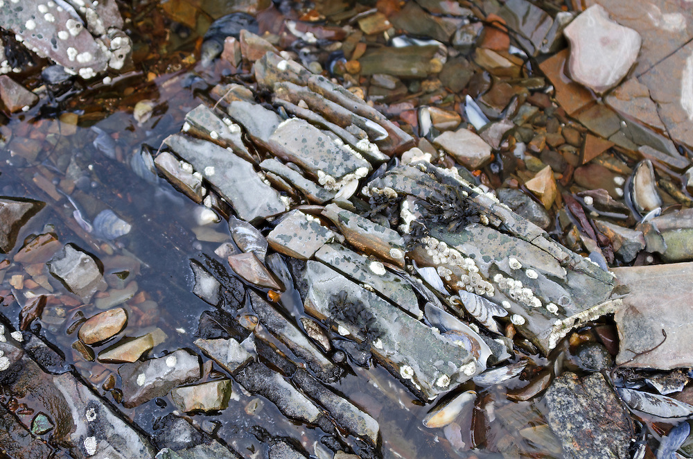 Closeup of Bar Harbor Formation outcrop on the shoreline of Bar Harbor, Maine