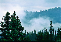 Advection fog passes through a conifer forest in Colorado.  Advection occurs when cooler air blows through an area while the moisture content of the air is not reduced enough to avoid saturation.
