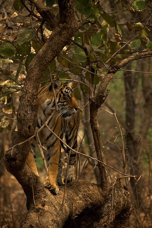 Shoot 4 Ranthambhore 2012
