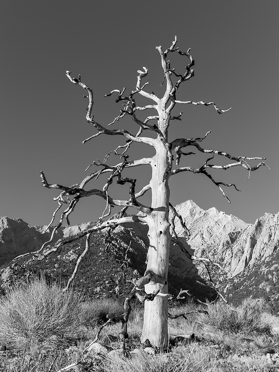 https://Duncan.co/dead-tree-at-lone-pine-2