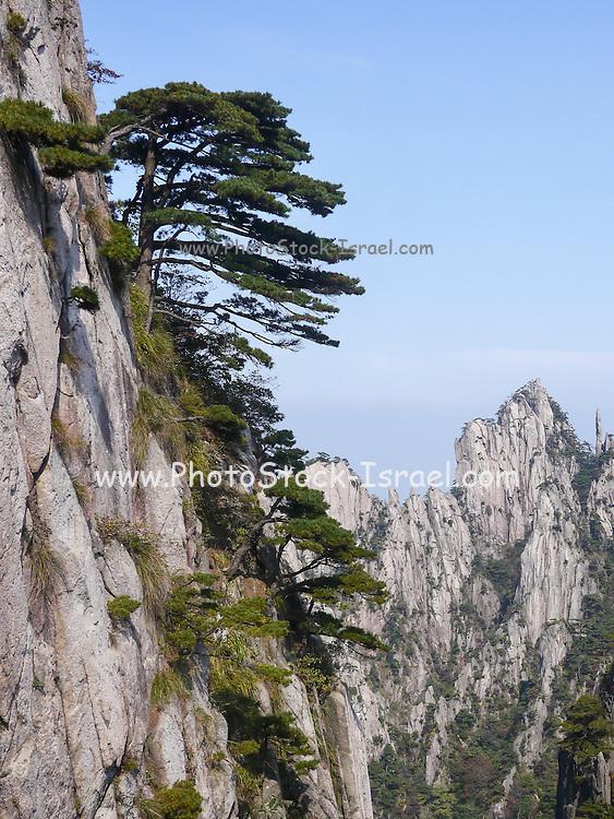 Huangshan (Yellow Mountain) Anhui, China. Granite cliffs