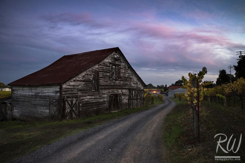 Barn and Vineyard at Sunset During Fall Season, Dry Creek Valley AVA, California
